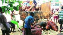 Villagers in Bastar wait six months, get rotting ration