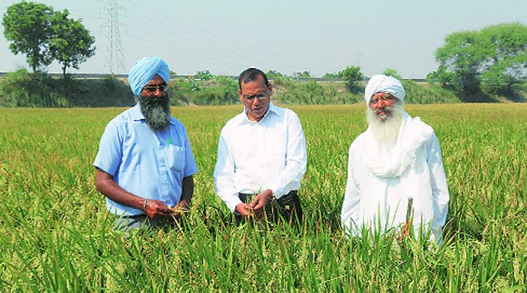 Two scientists, two blockbuster crop varieties