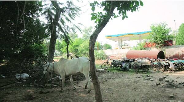 The scrapyard near the petrol pump. ( Source: Express photo by Amit Mehra )