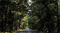 Surat to be first in state to conduct tree census