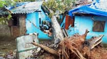 Tree plantation in Koraput to compensate for loss in CycloneHudhud