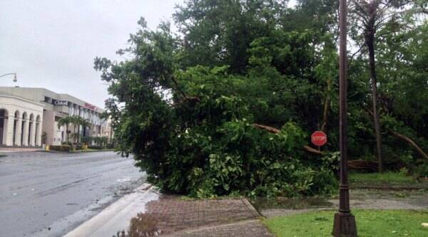 A fallen tree blocks a sidewalk in Tumon, Guam, Monday, Oct. 6, 2014. (Source: AP)