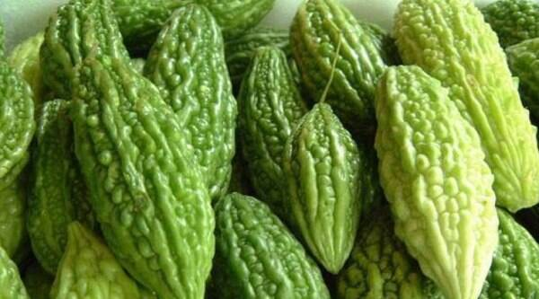 Bitter Gourd is recommended for Diabetes (Ziabetes) patients as per Unani Medicine