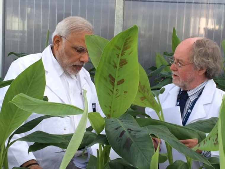 Enhancing understanding of bio-technological processes to fortify bananas.