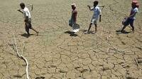 Maharashtra food grain production hit by drought