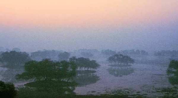 Sunrise at Sultanpur National Park.