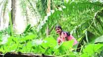 Oscar-winner Megan Mylan's next documentary on girl empowerment in ruralIndia