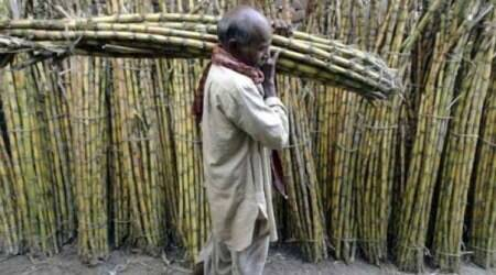 Govt to pay Rs 1,540 crore to cane growers on mills' behalf to help clear partarrears