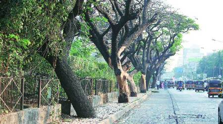 Huda Survey- Over 32,000 trees in Panchkula, Arjun and Kusum most abundant: Data