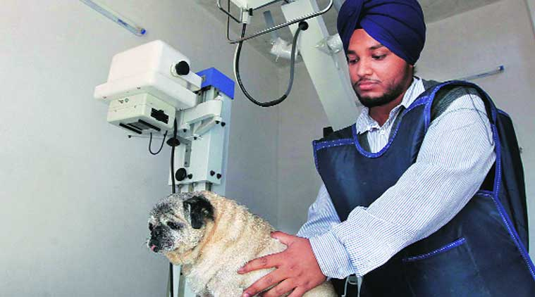A dog being treated at the laboratory. (Source: Express photo by Kamleshwar Singh)