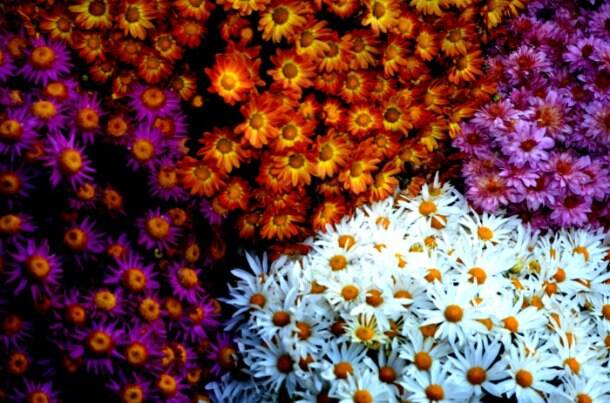 Best of flower art at Chrysanthemum Flower Show