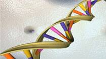 Artificial enzymes suggest life doesn't need DNA or RNA: Research