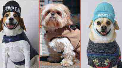 Pet Fashion: Dogs in designer wear is the latest fad