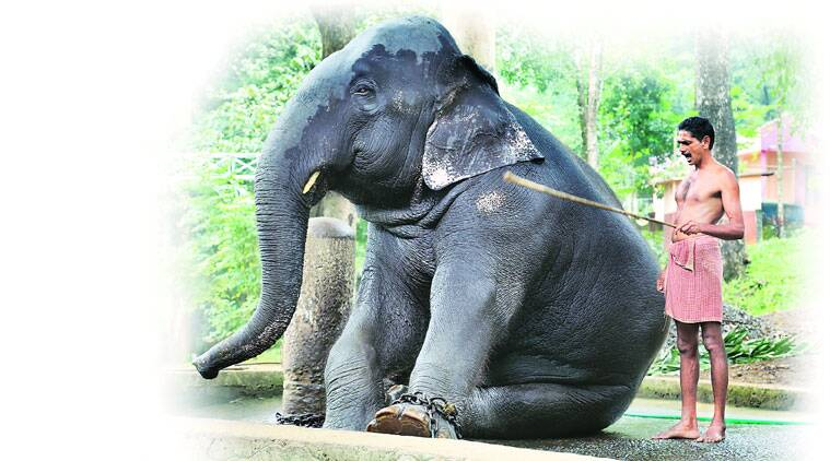 """Irikke aane, irikke (sit, elephant, sit),"" yells his mahout, prodding his legs with a stick."