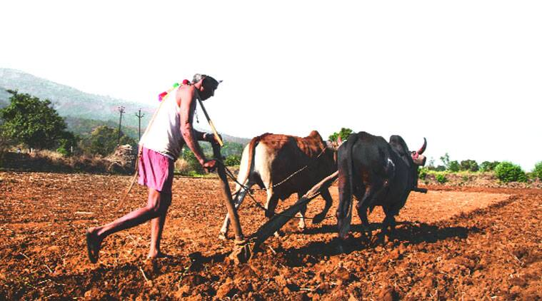 crop insurance, farmers crop insurance, india crop insurance, crop insurance farmer, farmers suicide, crop damage, rain crop damage, crop schemes, india news, nation news