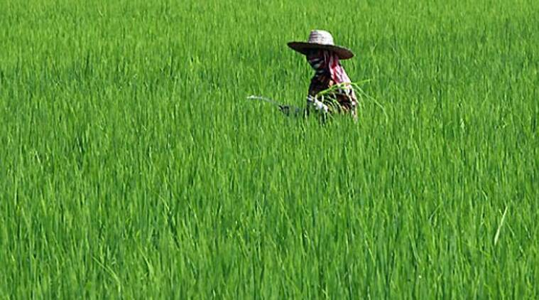Low viability comes from the small size of the average holding in India (only 1.15 hectares), with 85 per cent of them being under two hectares.