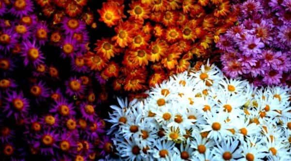 flowers-main