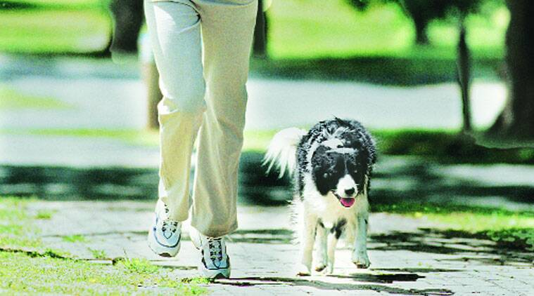 It might seem that having a pet dog would result in considerable physical activity, and that's true, broadly speaking.