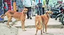 Acid attack on dogs spreads panic in city's Sham Nagar