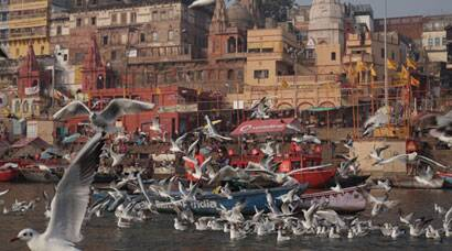 Migratory birds attract tourists along Ganga in Varanasi