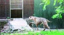 Animals at Delhi zoo get a warmtreatment