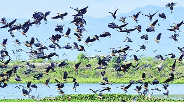 Villagers claim 25 species of birds are spotted in this wetland.