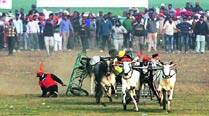 No bull races in Kila Raipur sports fest this time