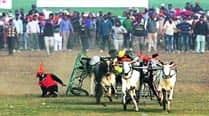 No bull races in Kila Raipur sports fest thistime