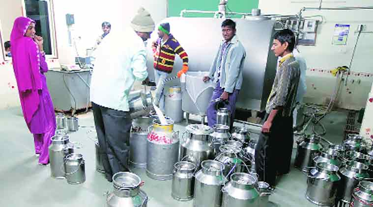 The best thing about this business is that we get paid on the 1st and 16th of every month, say dairy farmers. (Source: Express Photo By Bhupendra Rana)