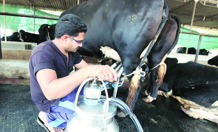 Devansh and his brother Nimesh started their tabela in 2006 with 25 cows; they now have 60.