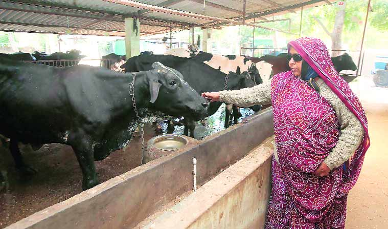 Ishabehn has an annual income of Rs 53 lakh from milk, besides another Rs 2.25-odd lakh through sale of dung.