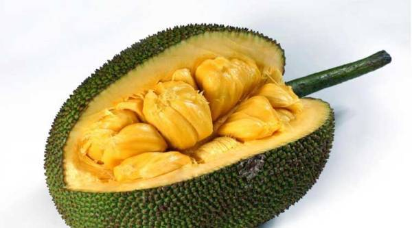 Jackfruit: A fruit, a vegetable and everything in between