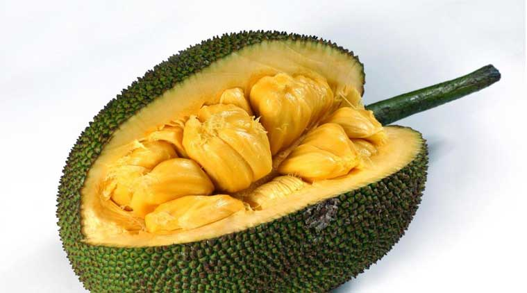 Jackfruit to be Kerala's state fruit