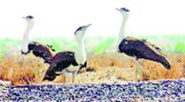Gwalior-Jaipur electric line gets nod, WII suggests steps to reduce impact onwildlife