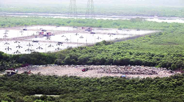 Mumbai construction debris, Kanjurmarg creek, mumbai mangroves, mumbai news, maharashtra news, indian express news