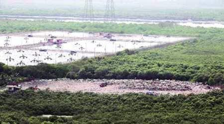 Mumbai construction debris, Kanjurmarg creek, mumbai mangroves, mumbai news, maharashtra news, indian express news