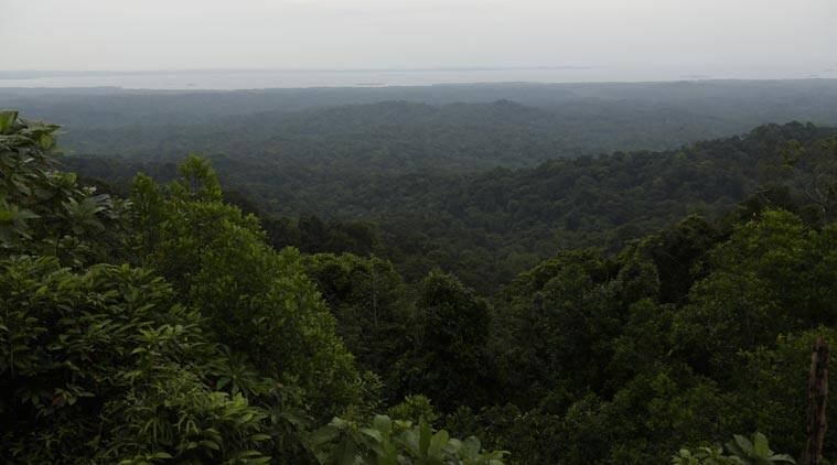 In this Sunday, Sept. 7, 2014 photo, a general view of rainforest near the ocean as seen from Guna Yala, Panama. Deforestation is by far the biggest source of carbon pollution in Panama, and the government is working to ensure that it plants trees or protects forests so its carbon balance sheet remains positive. (Source: AP)