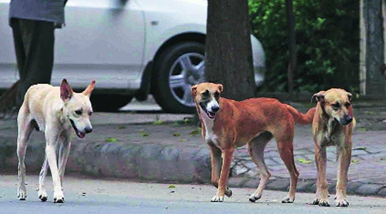 The court is hearing a petition filed by Gurmukh Singh, a resident who had highlighted the dog menace in the city.