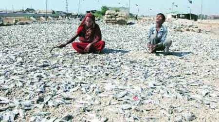 Indian fishermen, fishermen, Pakistan Maritime Agency, fishermen arrest, International Maritime Boundary , cops target fishermen, cops target fishemen wives, scared fishermen, fishermen in sea, DATS, ahmedabad news, city news, local news, ahmedabad newsline