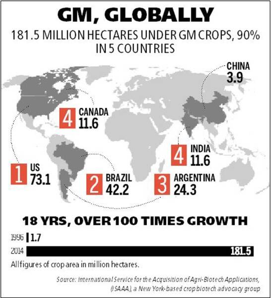 India world's 4th in GM crop acreage, well ahead of China
