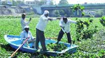 PCMC kicks off campaign to remove hyacinth, officials see uphilltask