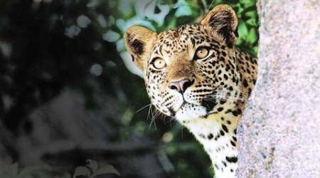 Leopard kills teen on FRI campus