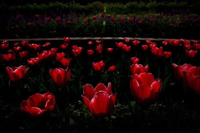 mughal garderns, lughal garden open, mughal gardens open, mughal gardern pranab mukherjee, mughal garderns delhi, mughal garderns pictures, india news, news,