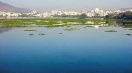 Water hyacinth on Pashan lake catches fire, greens raiseconcern