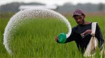 Govt delays urea imports, farmers  left in distress
