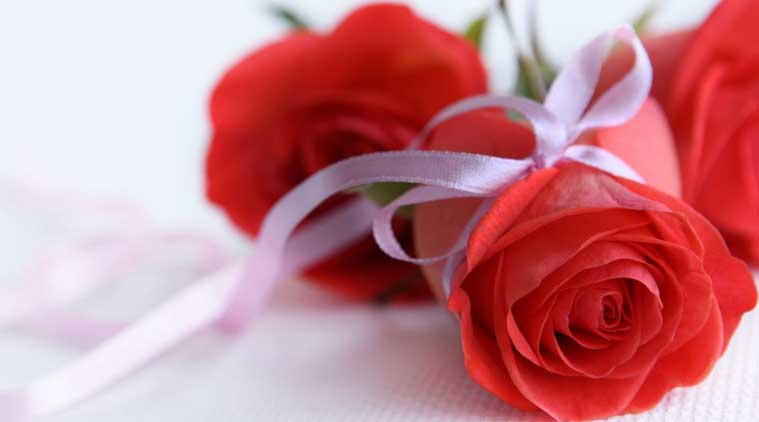 why it is red rose for valentine's week  the indian express, Natural flower