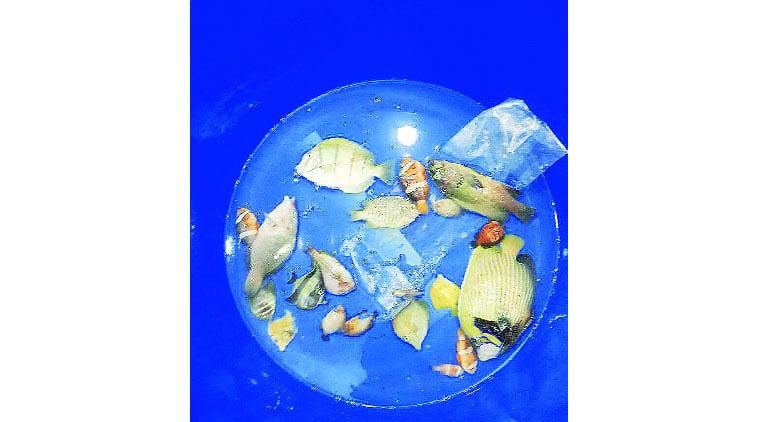 Taraporewala Aquarium, fish died, polltuion, 100 fish died, arabian sea, filtterd water usage, mumbai news, city news, locla news, mumbai newsline, maharashtra news