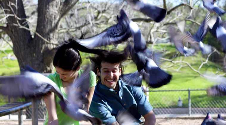 birds-main