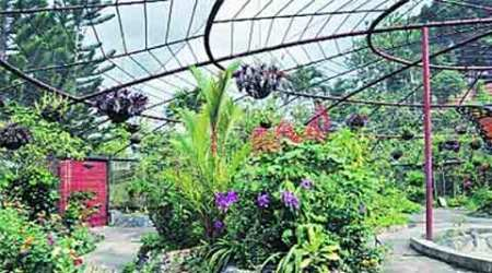 RTI reply says butterfly park to cost Rs 6 lakh, VMC calls it 'humanerror'