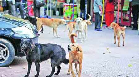 Around 50 dog-bite cases are reported every month at Mohali civil hospital